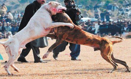 Hasta 5 años de cárcel quien organice peleas de perros