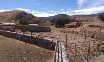 Fueron asegurados 4 ranchos de César Duarte con ganado de programa social