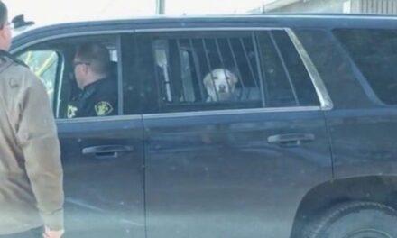 Policía de Canadá arrestan a perro por perseguir a un ciervo
