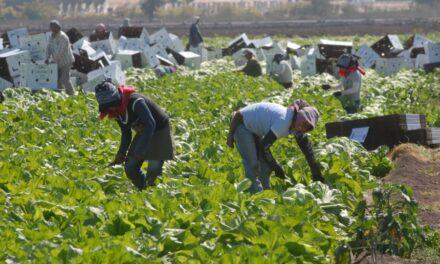 Gobierno federal quitó apoyos a jornaleros agrícolas temporales