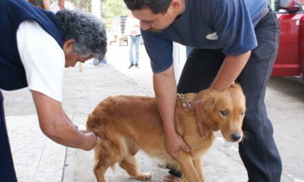 Vacunaron contra la  rabia a perros y gatos en  Chiautla de Tapia