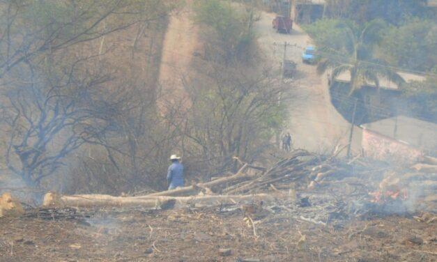 Detectan tala y quema de árboles de manera clandestina en Chiautla