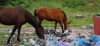 La ganadería de los montes, pobreza y deterioro ambiental
