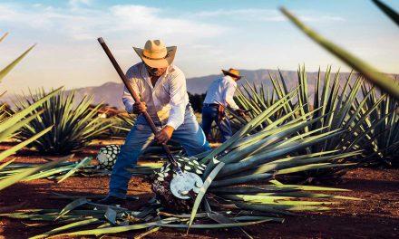 Producción y exportación de tequila crece en medio de la pandemia