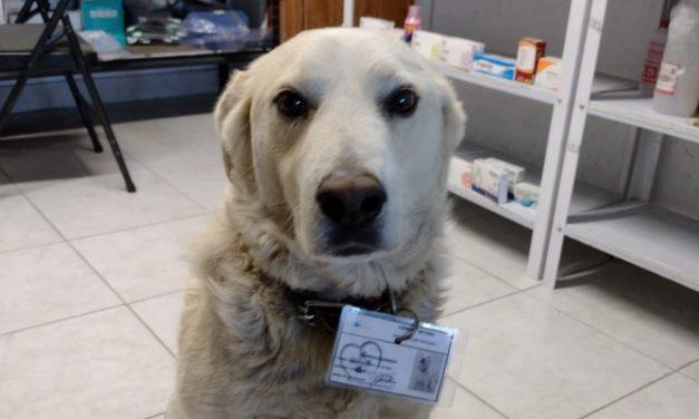 Contratan a perrito como jefe de seguridad en una farmacia; hasta gafete le dieron