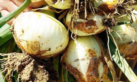 Utilización de feromonas como anti-plagas en cultivos agrícolas