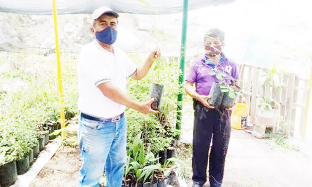 Empresa donó plantas para reforestar Teopantlán y Tepexco