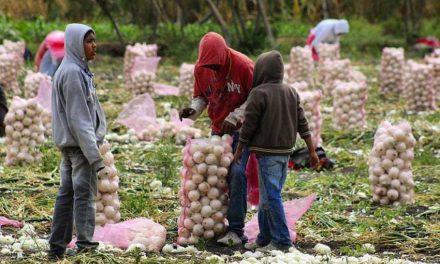 Estados Unidos acusa a cebollas mexicanas de tener salmonela